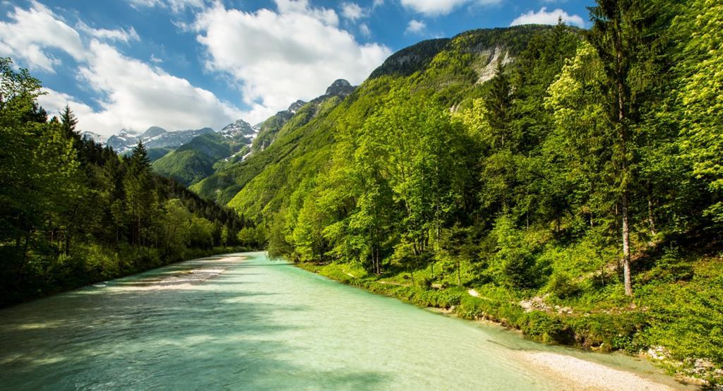 Faites un trek dans la vallée de Soca pour découvrir la faune de slovénie