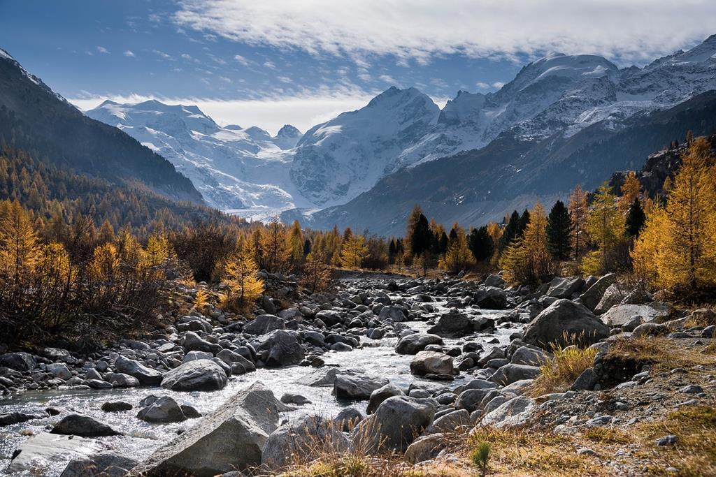 Le mélèze d'Europe est un arbre qui prospère dans les Alpes