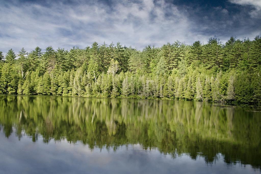 La Haute-Savoie regorge de forêts de sapins