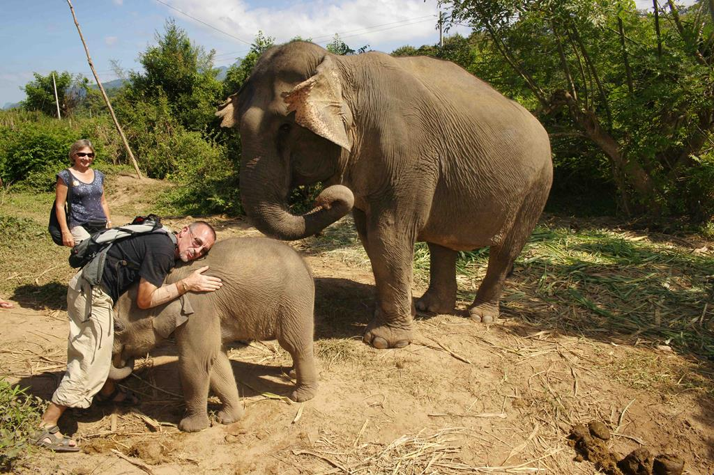 Rencontre avec les éléphants du Laos